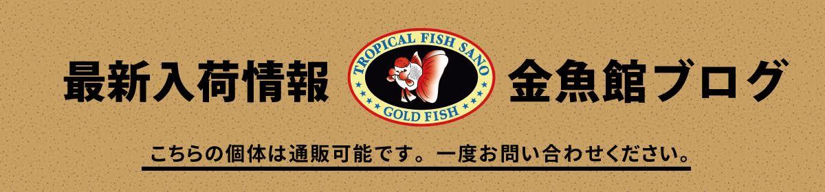 トロピカルフィッシュ佐野 金魚館ブログ